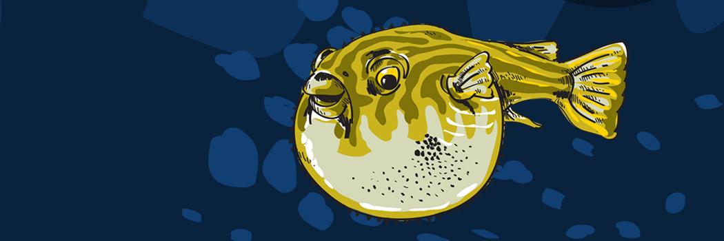 Fugufisken - oppustede boblerier
