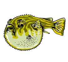 Fugufisken